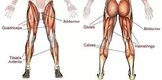 bouwt beenspieren op