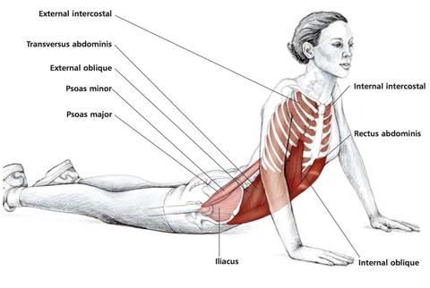 should you stretch a pulled muscle